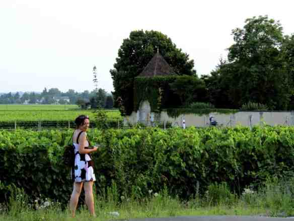Saint Emilion Vineyards