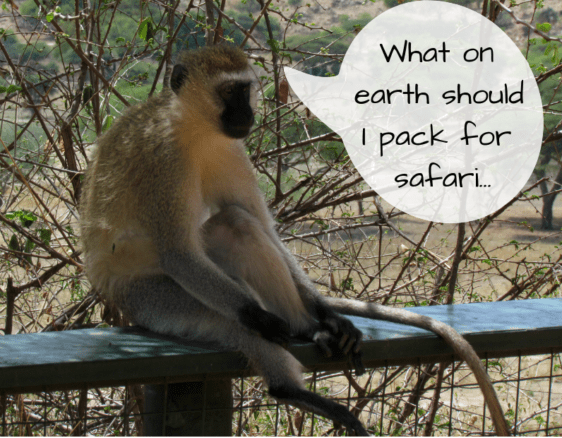 Monkey wondering what to pack for safari