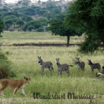 Safari Holidays in Africa: Luxury Tanzania Trip