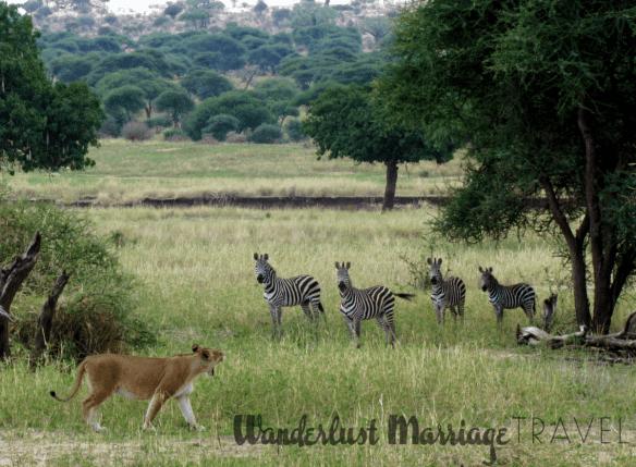 safari holidays Africa