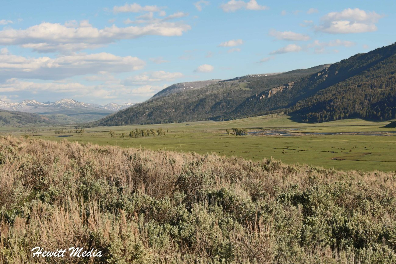 Yellowstone-1111