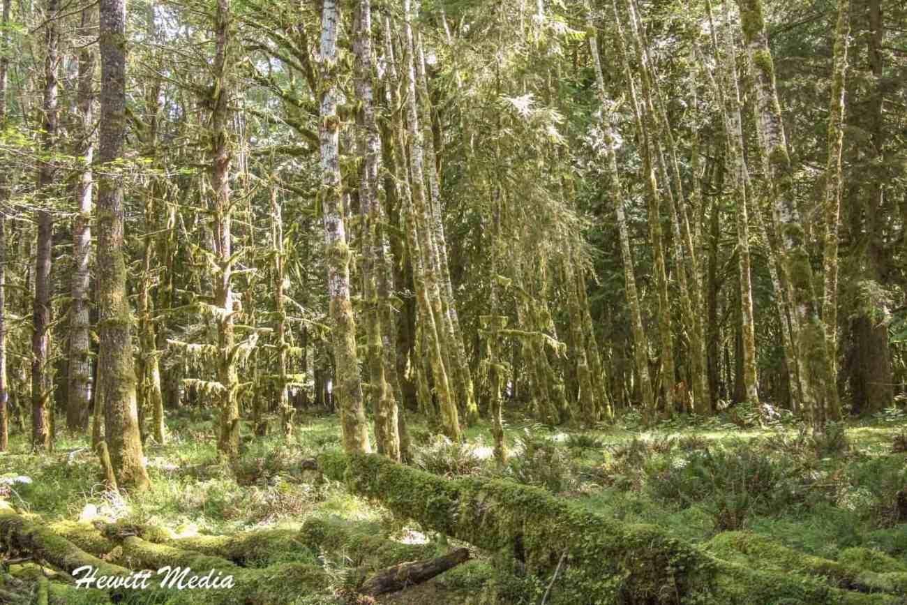 Quinault Rain Forest-3658.jpg