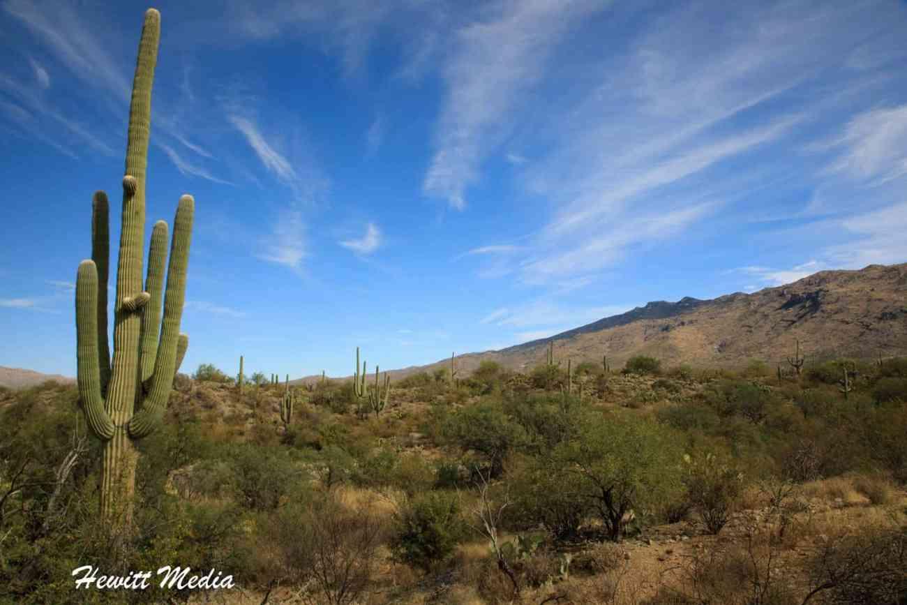 Desert Parks Road Trip - Saguaro