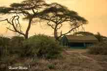 Serengeti-1733