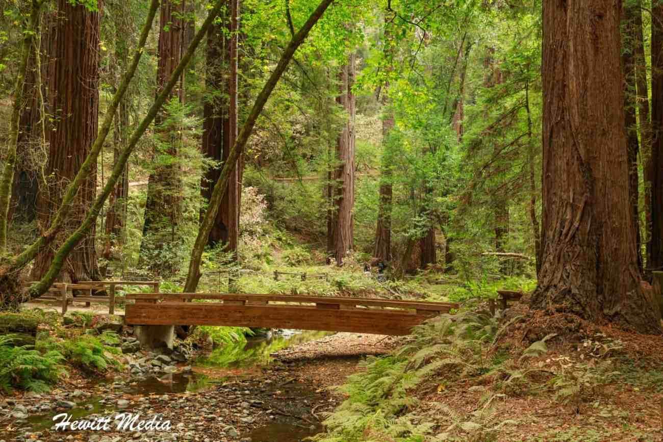 Muir Woods-4993