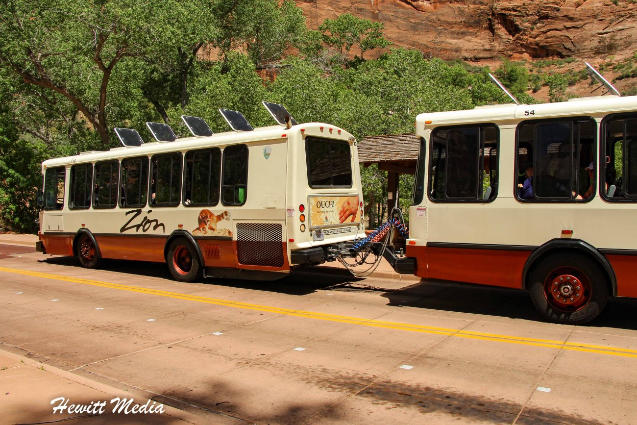 Zion National Park-2422