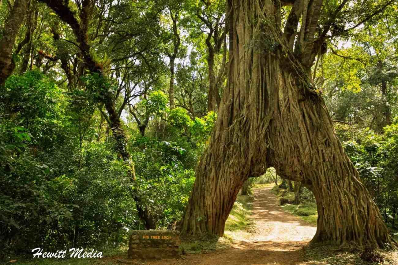 Arusha National Park-2-10