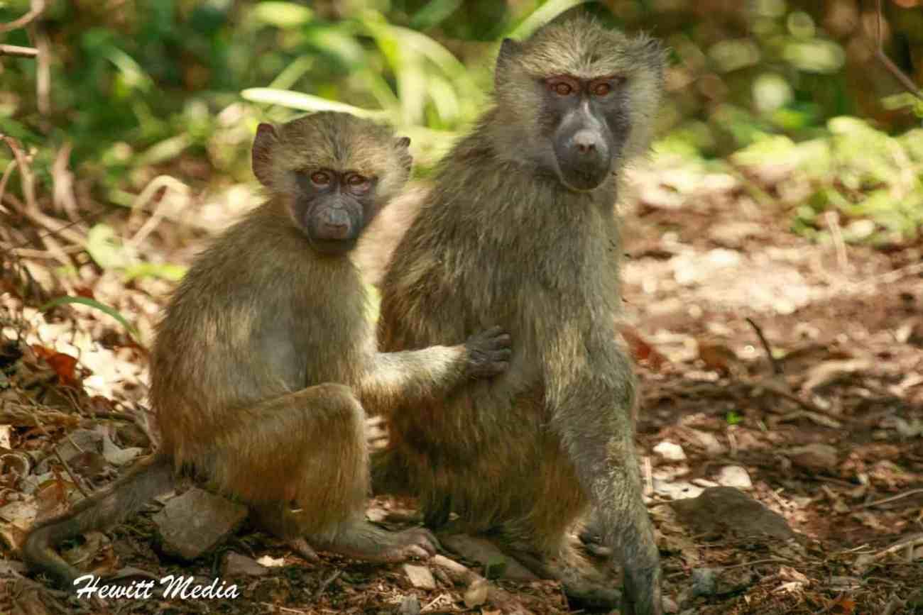 Arusha National Park-2-3