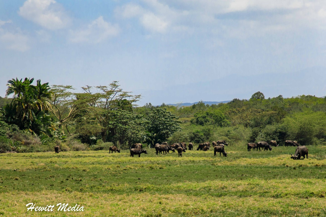 Arusha National Park-2-6