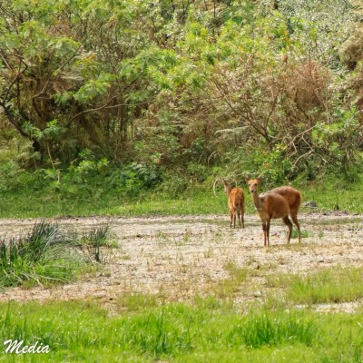 Wildlife is plentiful in Arusha National Park