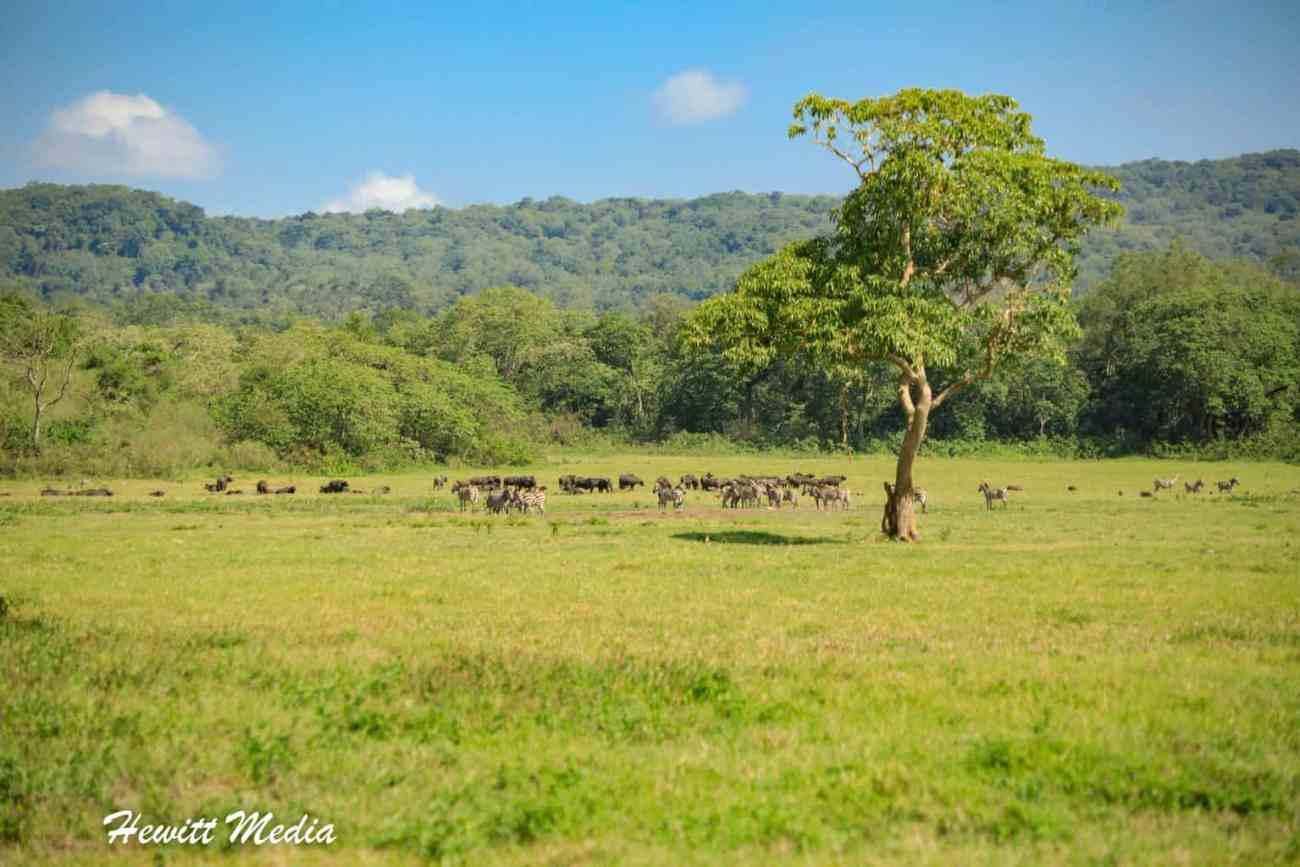 Arusha National Park-3813