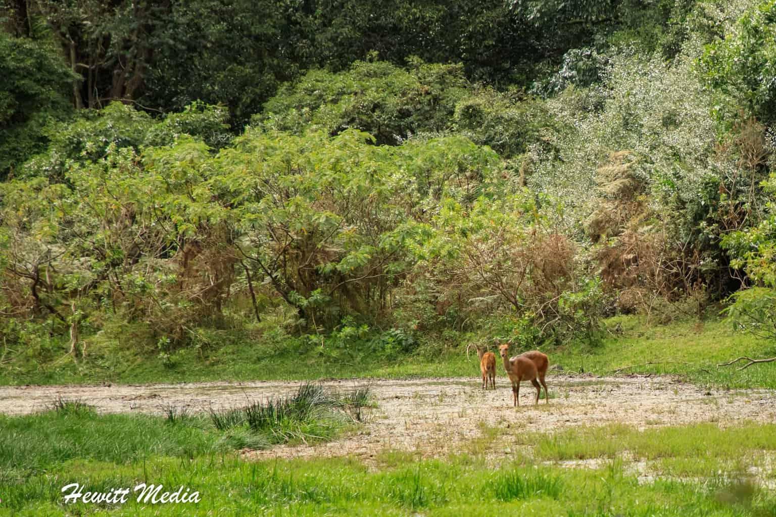 Wildlife inside Arusha National Park