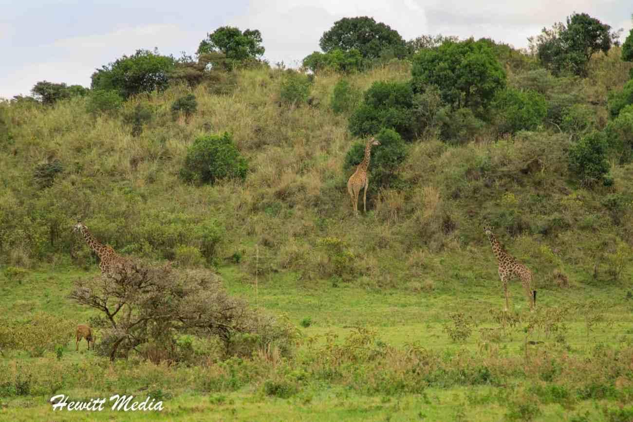Arusha National Park-4176