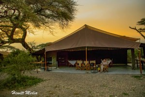 Serengeti National Park Safari Guide