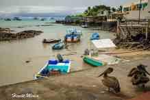GalapagosPlanning-17332