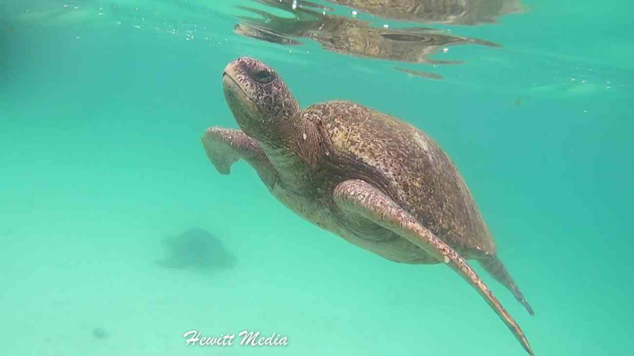 Galapagos-.jpg