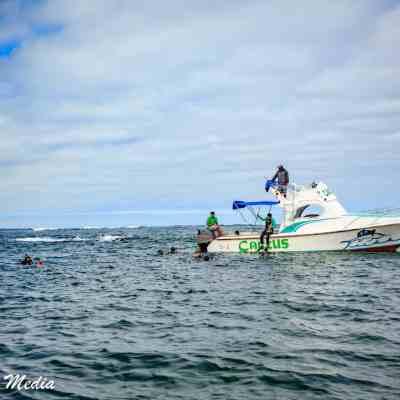 Snorkelers off of Isabela Island.