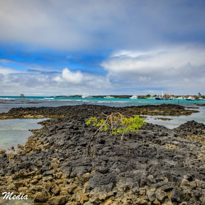 Coastline on Isabela Island.