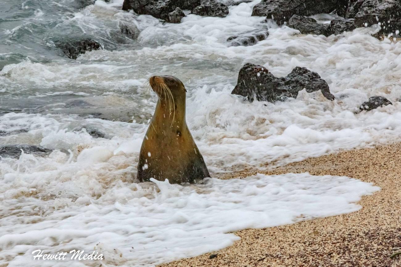 Galapagos-0362.jpg