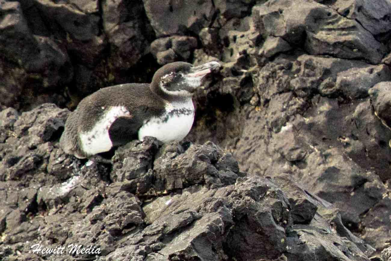 Galapagos-9734.jpg