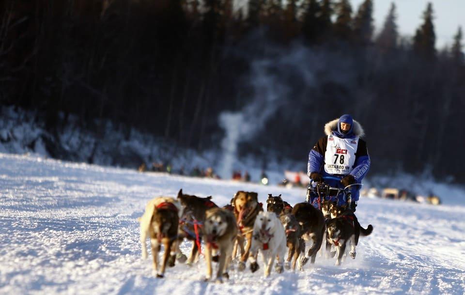 The Iditarod.jpg