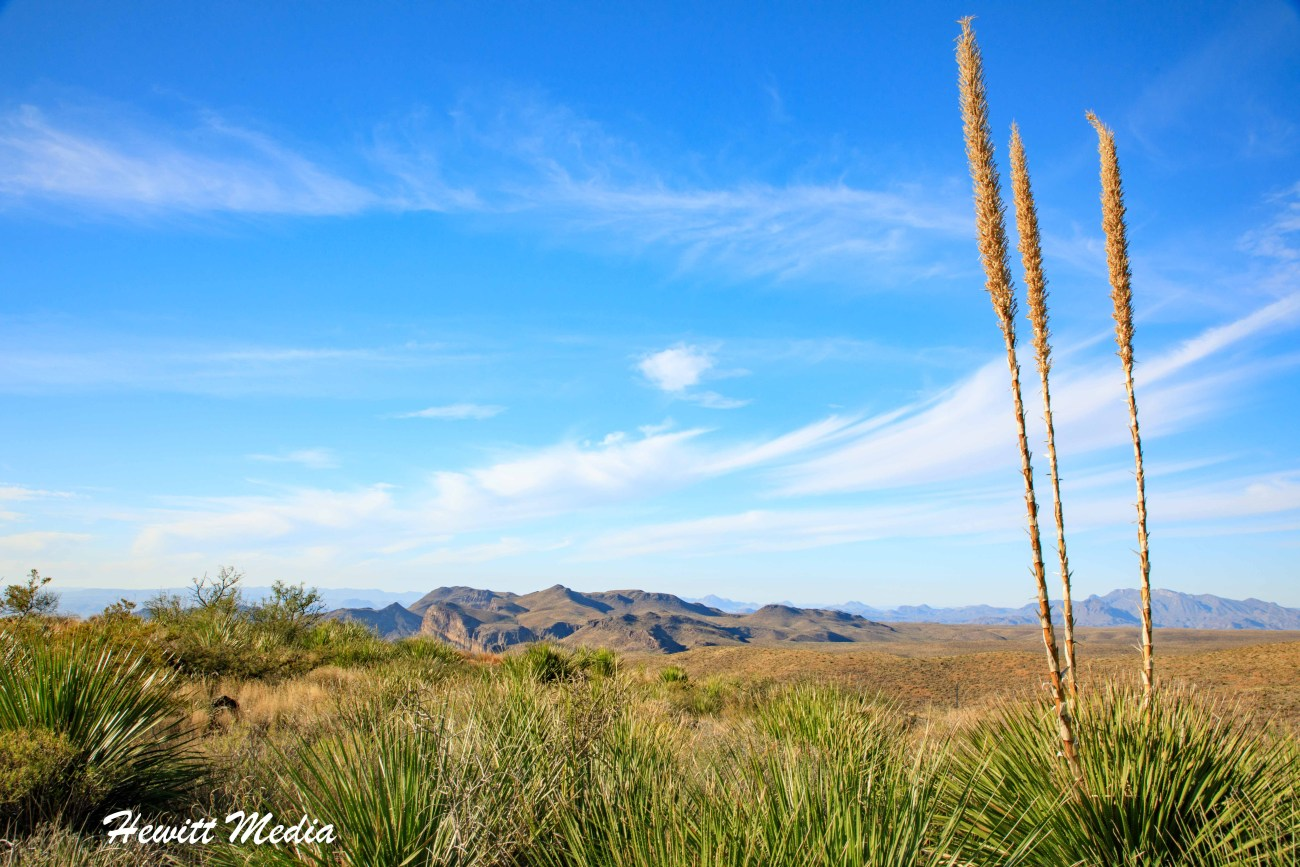 Big Bend National Park-5585