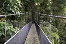 Costa Rica Rainforest Walk