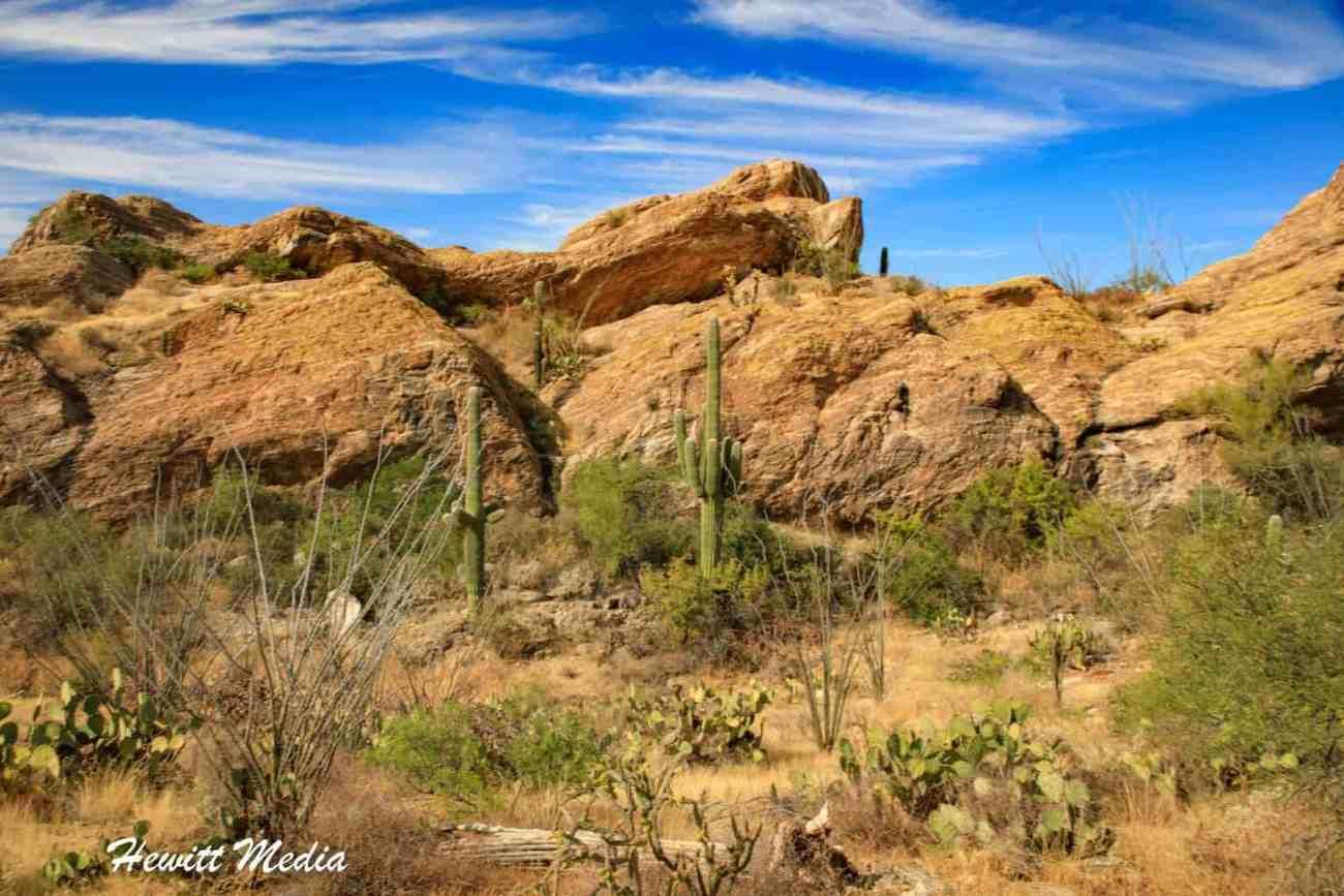 Saguaro National Park-6015