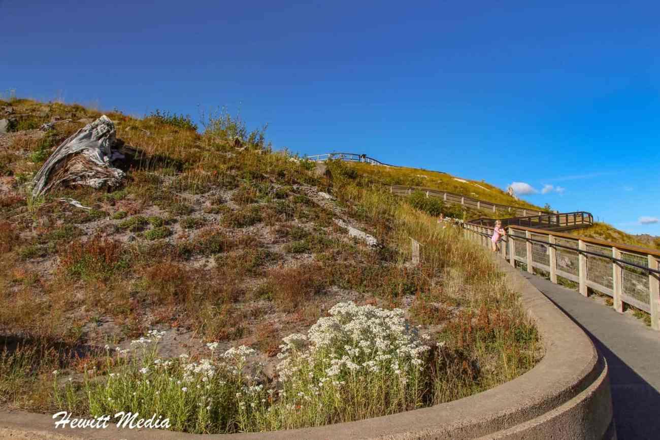 Mount St Helens-4402