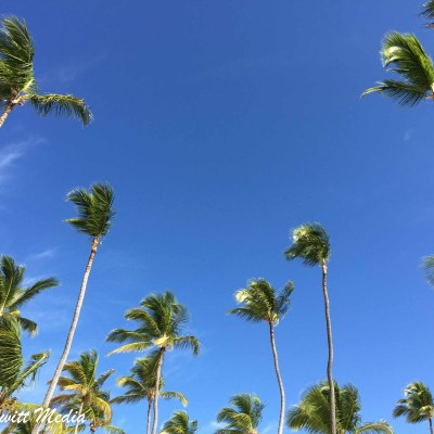 Beautiful palm trees in Punta Cana