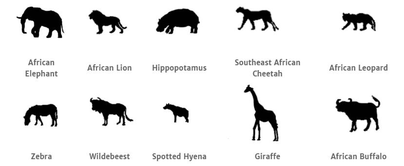 Serengeti National Park animals.png