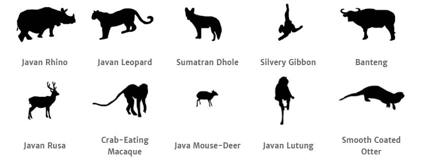 Ujung Kulon National Park animals.png