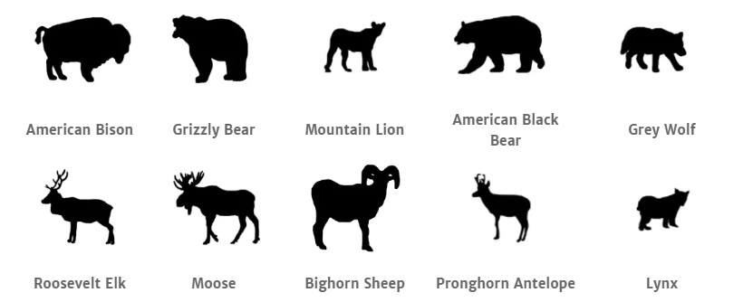 Yellowstone National Park animals.png