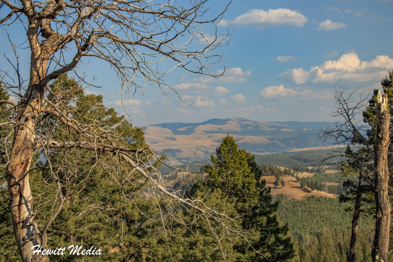 Yellowstone-5371