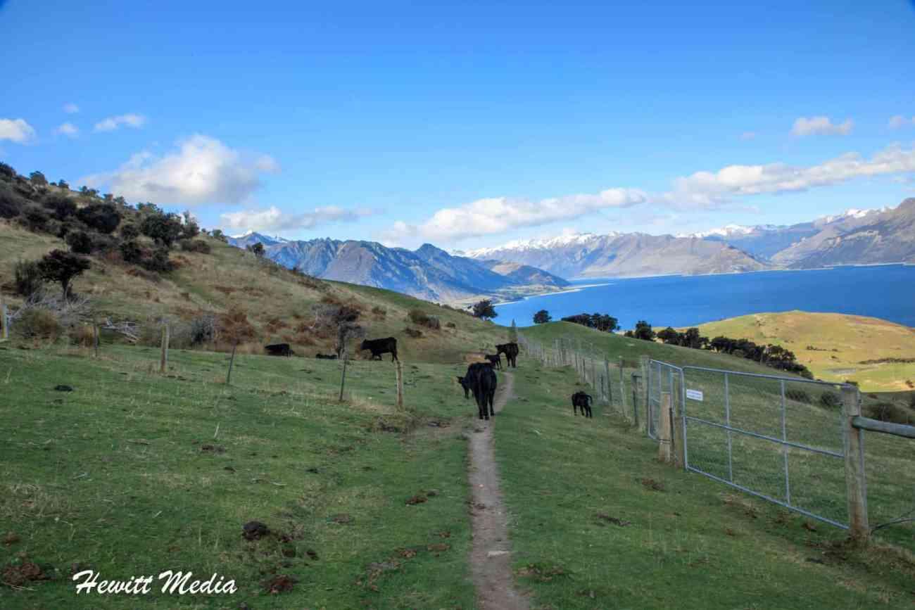 Isthmus Peak Track Hike-5090