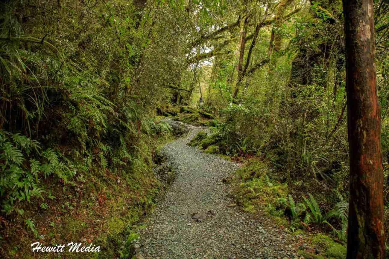 Milford Sound-4423.jpg