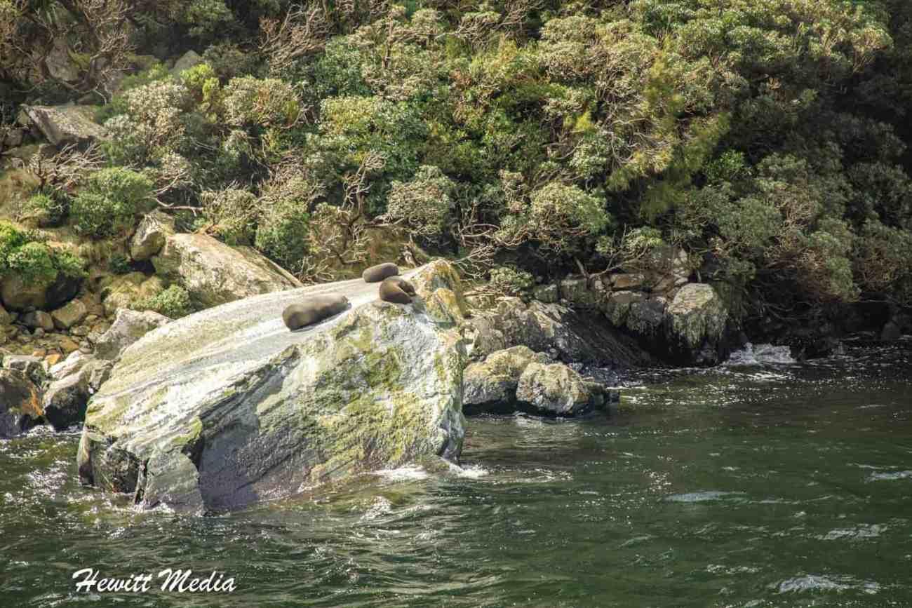 Milford Sound-4758.jpg