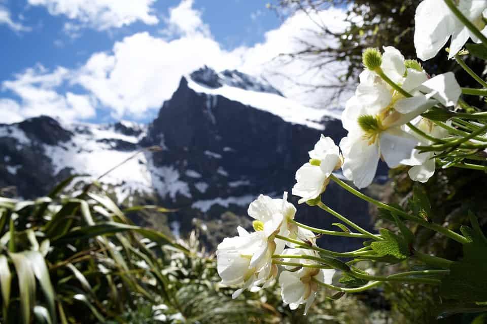 nature-3373633_960_720.jpg