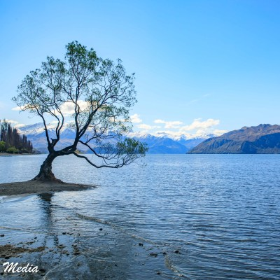 The beautiful Wanaka Tree at sunset