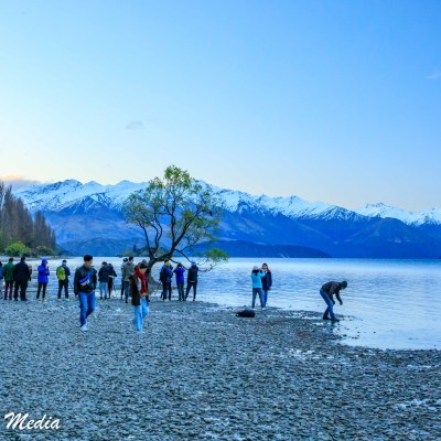 Crowd gathers to photograph the Wanaka Tree at sunset