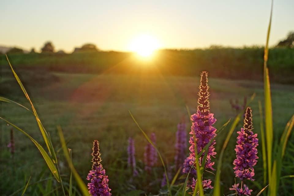 Sunrise Flowers