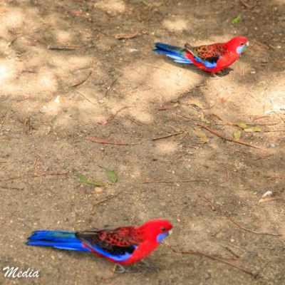 Beautiful birds at Kennett River