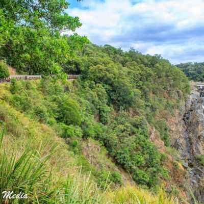 Kuranda Rainforest-2331