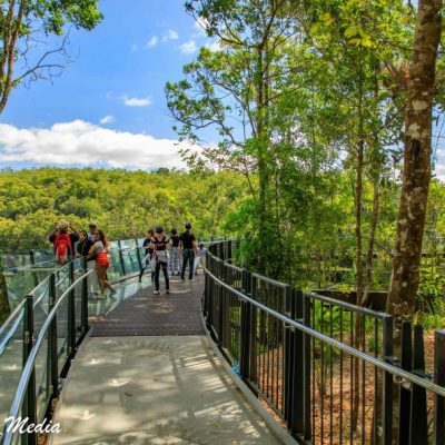 Kuranda Rainforest-2424
