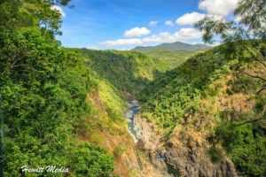 The Complete Kuranda Rainforest Visitor Guide