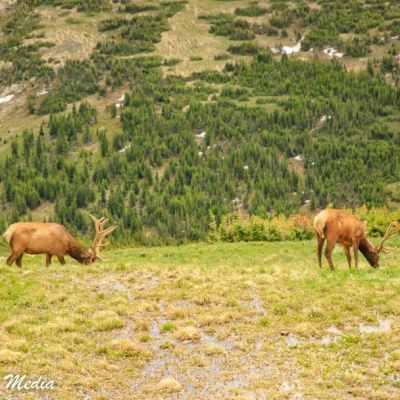 Rocky Mountain National Park-5803
