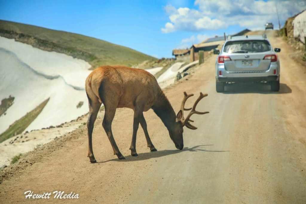 Rocky Mountain National Park Guide -   Alpine Visitor Center Elk