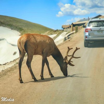 Rocky Mountain National Park-5808