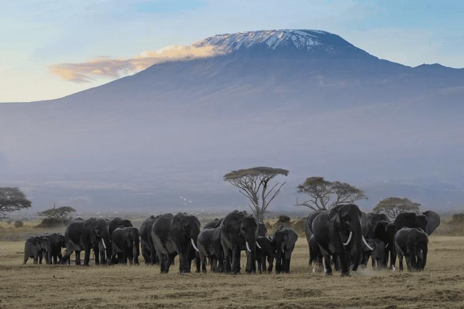 Top 2021 Travel Destinations - The Maasai Mara Game Reserve
