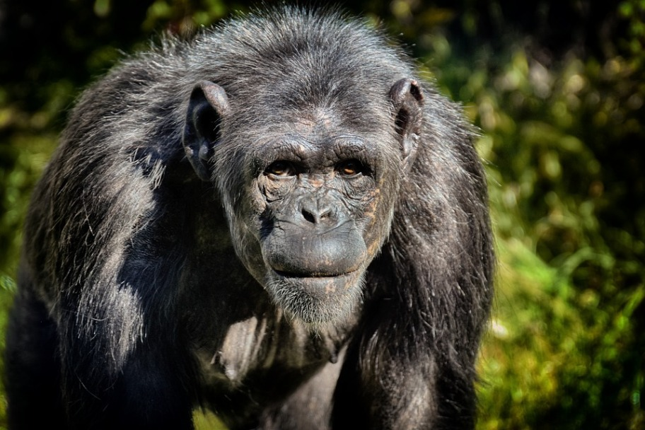 Tanzania Safari Itinerary - Gombe National Park